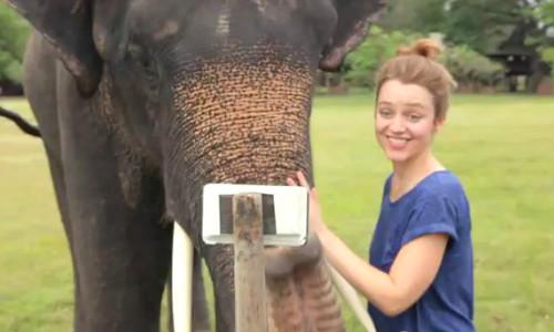वीडियो में देखें जब हाथी ने चलाया सैमसंग का गैलेक्सी नोट स्मार्टफोन