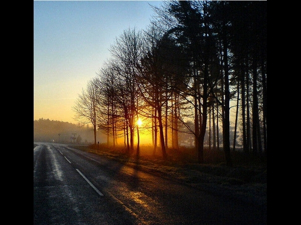 Sunrise On Cannock Chase By Jennie Anderson