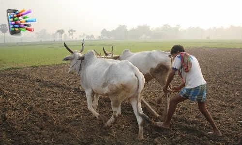 बंगाल के किसानों की समस्या सुलझाएगा यह एप्प