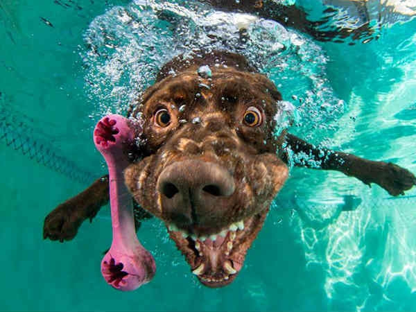 Underwater Photos of Dogs Fetching Balls