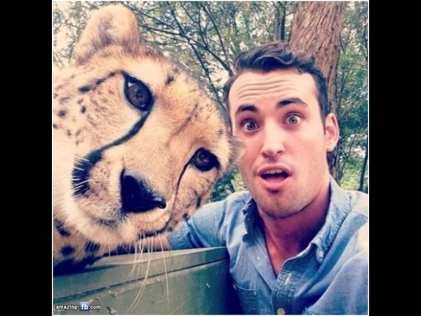Exotic cat selfie