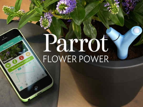 पौधों को जीवित रखने के लिए नया 'स्मार्ट पॉट'