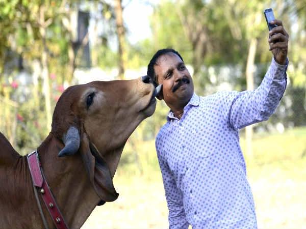 सेल्फी विद गौमाता कॉन्टेस्ट शुरू, भाग लेने के लिए अभी डाउनलोड करें ये ऐप