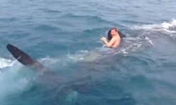 19 साल के लड़के कैसे की व्हेल शार्क से मुलाकात