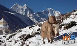नेपाल में बनेगा फ्री वाई-फाई जोन