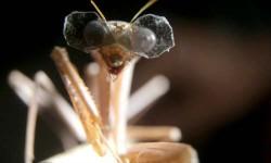 कीड़े की आंखों में दुनिया का सबसे छोटा 3डी ग्लास!