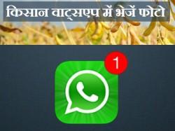 मप्र सरकार का फरमान, इल्ली की फोटो वाट्स एप पर भेजें किसान
