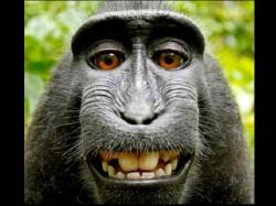 बंदर की सेल्फी को लेकर छिड़ा बवाल