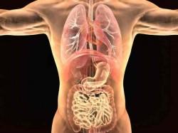 वैज्ञानिको के हाथ लगी बड़ी सफलता, शरीर के अंदर देखने वाली मशीन बनाई