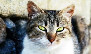 बिल्ली की आखों से कुछ ऐसी दिखती है दुनिया
