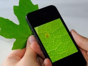 अनोखे लेंस से सूक्ष्मदर्शी में बदल सकता है स्मार्टफोन