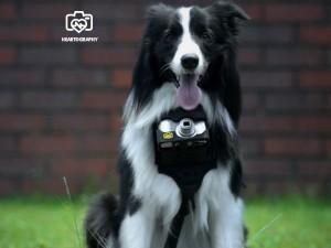 निकॉन ने बनाई ऐसी डिवाइस जिससे कुत्ता भी बना फोटोग्राफर