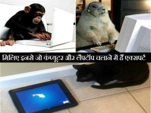 देखिए कैसे जानवर भी यूज़ करते हैं कंप्यूटर