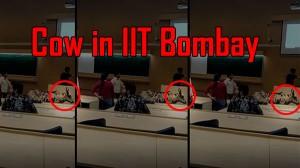 IIT Bombay की क्लासरूम में इंजीनियरिंग पढ़ाने पहुंची गाय, यहां देखिए वीडियो